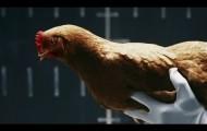"""Mercedes-Benz """"Chicken"""""""
